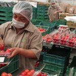 Producción agrícola exitosa