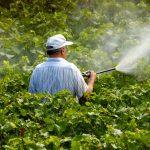 Expertos de ONU denuncian a defensores de las bondades de los pesticidas
