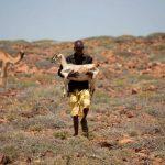 FAO atenderá animales de granja en Somalia