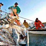 El papel de la FAO en la pesca