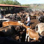 Excelencia en ganadería jalisciense