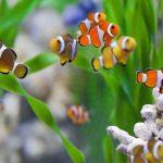 Genera acuacultura ornamental ingresos por 120 millones