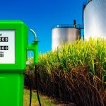 Producir gasolina con semillas