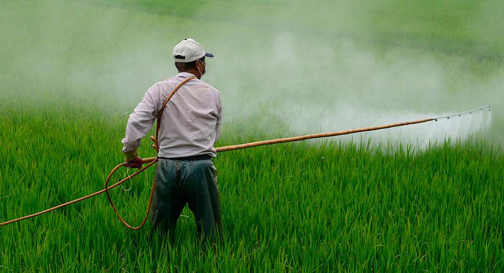 <br>Sin glifosato, la producción en el campo sólo caerá de 1 a 3%, señala Conacyt