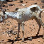 Combaten hambre en Somalia