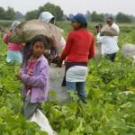 Advierte Unicef sobre vulnerabilidad de hijos de jornaleros
