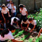 Huertos escolares: educación y autoconsumo