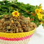 Huertos medicinales y su aportación ancestral