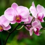 Venta ilegal de orquídeas ha rebasado a la Profepa, advierten productores