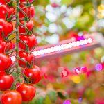Inicia mayor proyecto de iluminación led para horticultura en el mundo