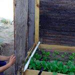 Impulsa Tecnológico la agricultura urbana