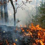 Incendios forestales asolan Puebla