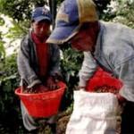 Indígenas, el 40% de jornaleros migrantes