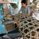 Buscan controlar brotes de influenza aviar en China