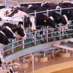 Innovación e investigación en ganadería