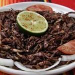 Los insectos, oportunidad de negocio