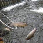 México: instrumentos jurídicos para ordenamiento pesquero