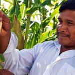 Invita Sagarpa a productores del sureste a sembrar maíz