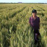 Irán y Cimmyt se unen para impulsar productividad del trigo