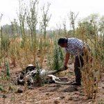 Istmo padece sequía de más de 3 años
