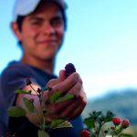 Jóvenes mexicanos, factor de cambio para el campo