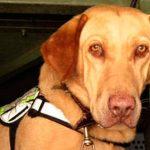 Jubilan a perro inspector