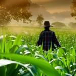 La agricultura, en la hoja de ruta de la ONU para el desarrollo mundial