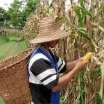La FAO aboga por una producción sostenible y eficiente de alimentos