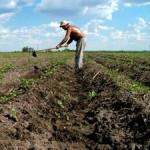 La seguridad alimentaria puede lograrse en una década: CNC