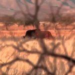 Desertan productores lecheros bolivianos