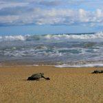 Día Internacional de Limpieza de Playas