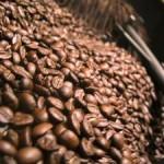 Llama Amecafé a impulsar producción de los granos tipo robusta y natural