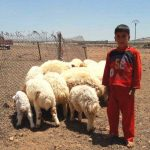 Lluvias en Siria, esperanza para agricultores