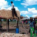 Proyecto Maíz Tolerante a la Sequía para África