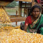 Mejoran condiciones agrícolas en Nepal