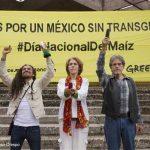 Crean mazorca humana en protesta contra maíz transgénico