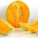 Aumenta producción de melón mexicano