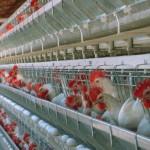 México propone comité trinacional en salud y producción avícola
