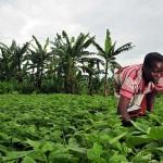 México y Brasil acuerdan formación conjunta de técnicos en agricultura tropical