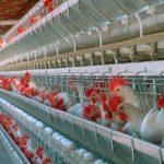 México entre los países con mejor estatus en sanidad agroalimentaria del mundo: Sagarpa
