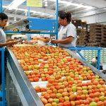 México aumentará presencia en mercado japonés