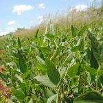Un vistazo al futuro de la biotecnología agrícola