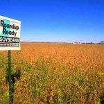 Monsanto y DuPont dejan guerra de patentes y se unen para producir más transgénicos