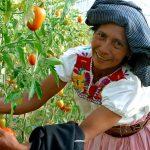 La mujer en el campo mexicano