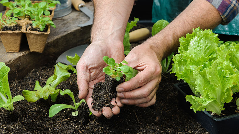 La agricultura del futuro: coséchelo usted mismo - 2000Agro ...