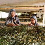 Los países pueden beneficiarse del comercio de alimentos