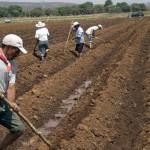 Gobierno federal pone pausa a iniciativa de reforma al campo