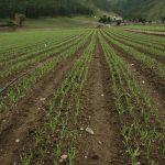 Agricultura para la paz en Colombia