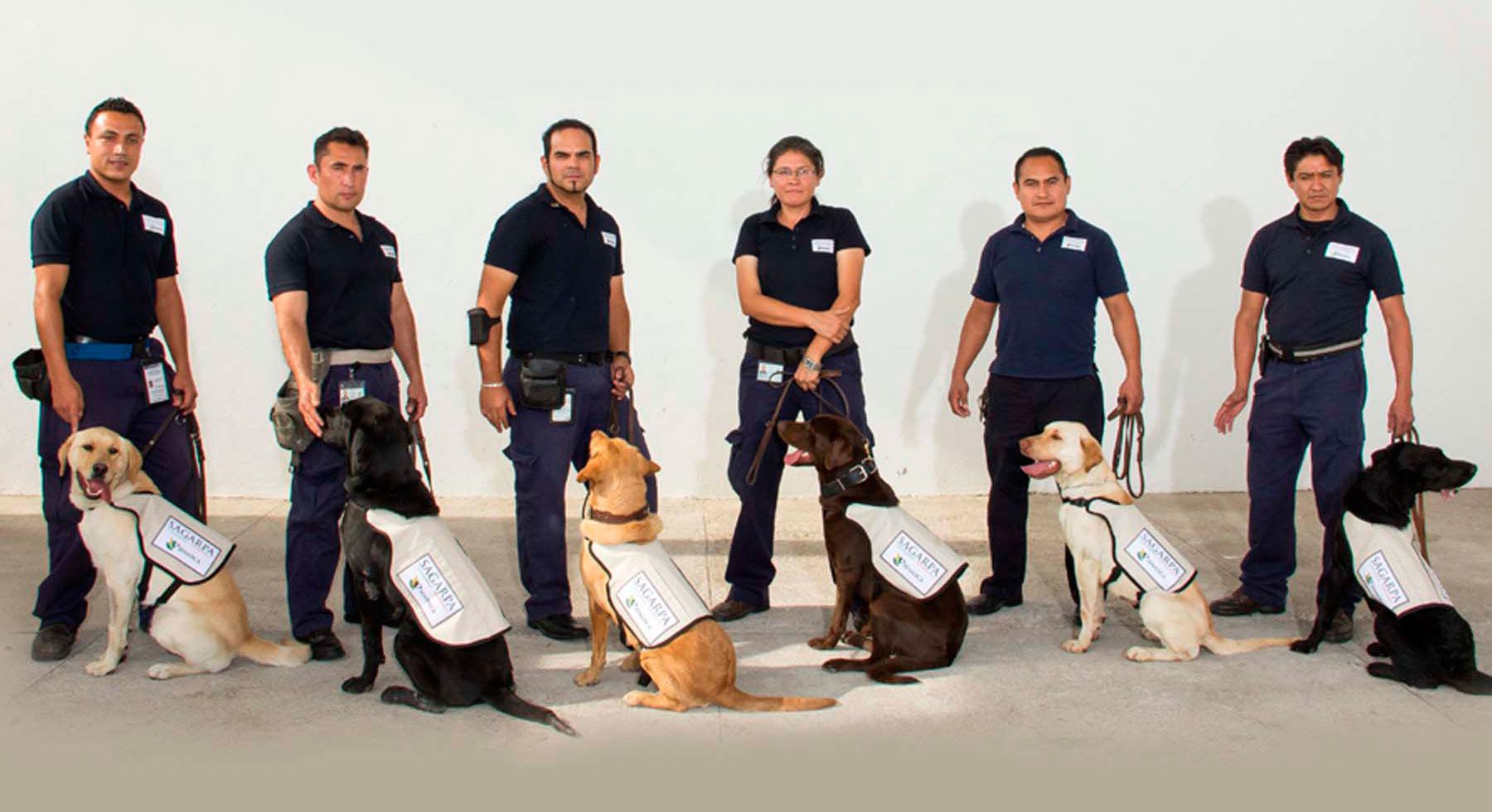 perros-inspectores