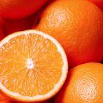 Usan perros para detectar HLB en naranjas en Florida